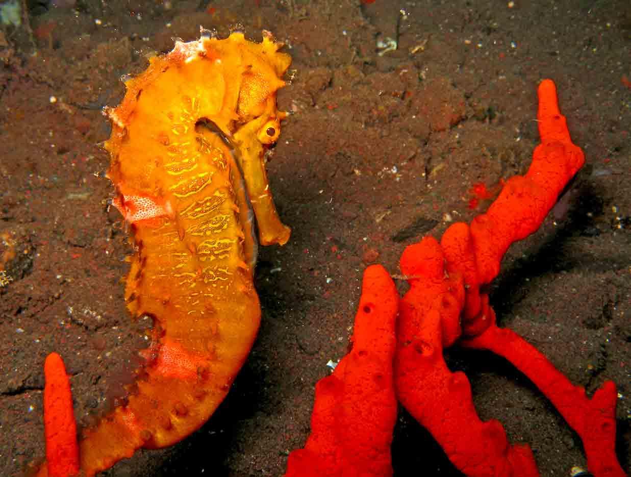 Gili-Trawangan-Lombok-Activities-Activity-Scuba-Scubadive-Scubadiving-Dive-Diving-97.jpg