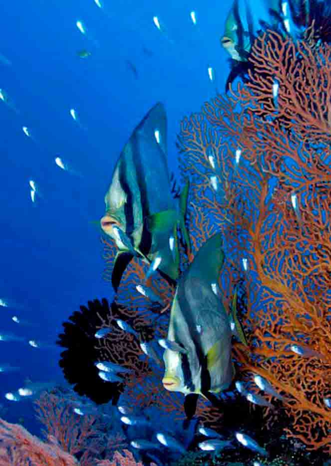Gili-Trawangan-Lombok-Activities-Activity-Scuba-Scubadive-Scubadiving-Dive-Diving-98.jpg