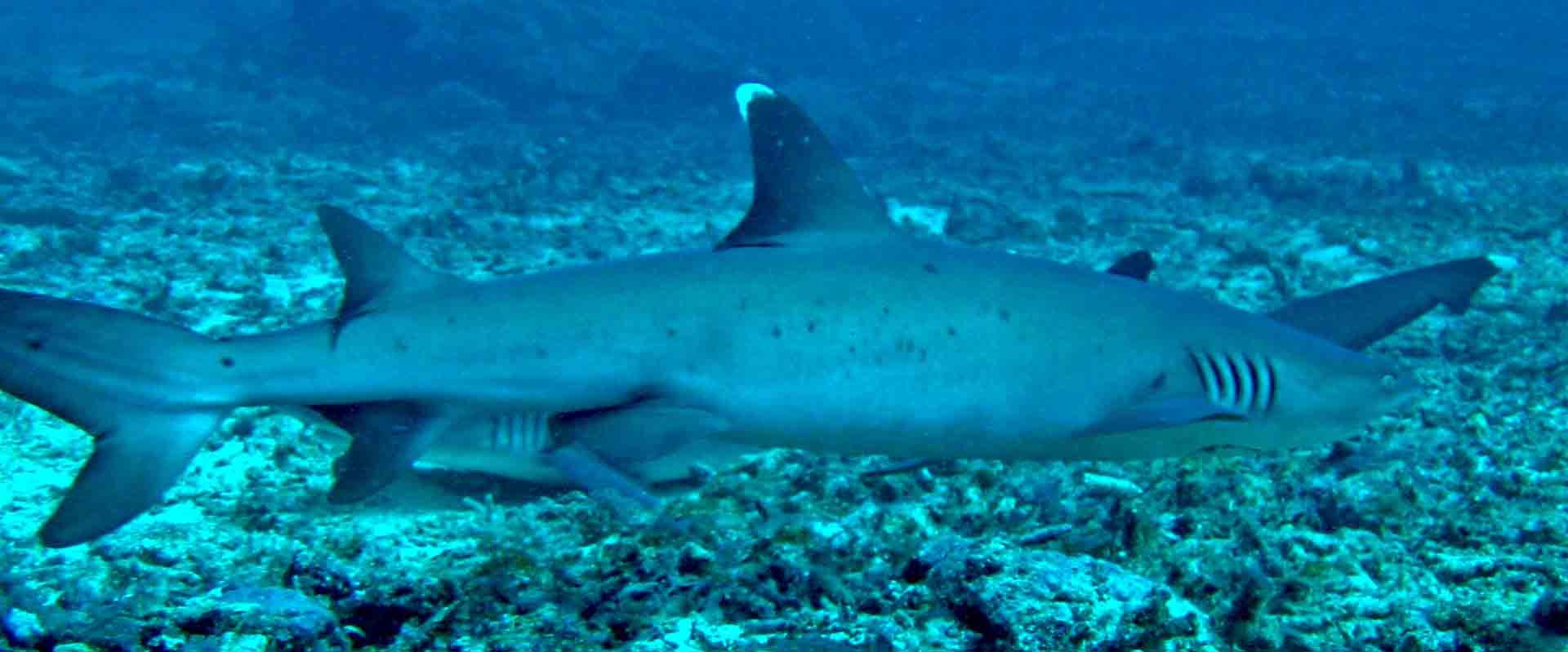Gili-Trawangan-Lombok-Activities-Activity-Scuba-Scubadive-Scubadiving-Dive-Diving-100.jpg
