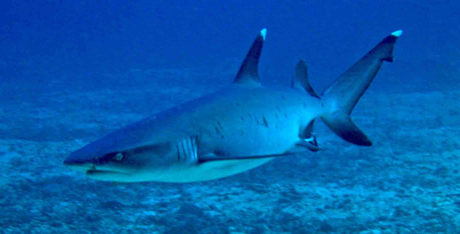 Gili-Trawangan-Lombok-Activities-Activity-Scuba-Scubadive-Scubadiving-Dive-Diving-101.jpg