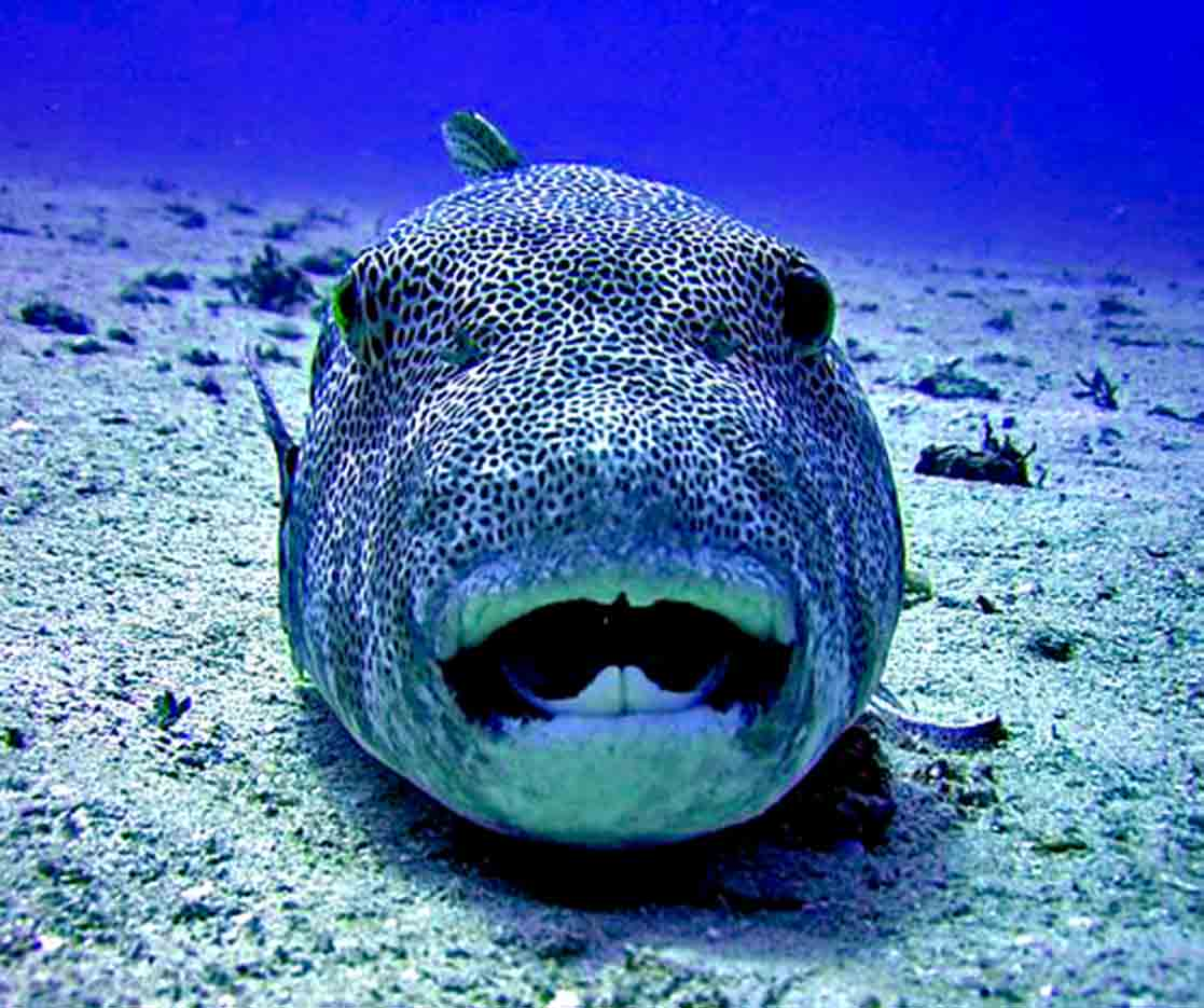 Gili-Trawangan-Lombok-Activities-Activity-Scuba-Scubadive-Scubadiving-Dive-Diving-102.jpg