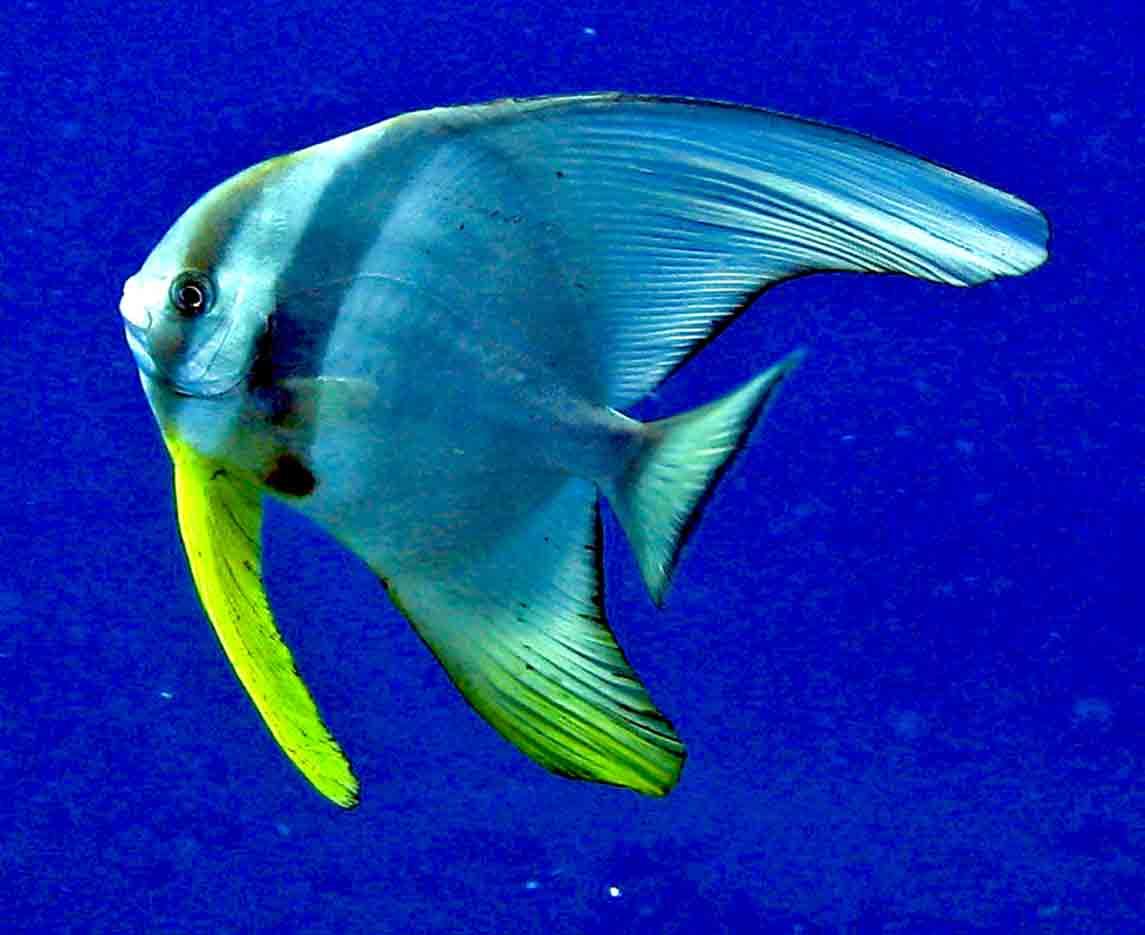 Gili-Trawangan-Lombok-Activities-Activity-Scuba-Scubadive-Scubadiving-Dive-Diving-103.jpg