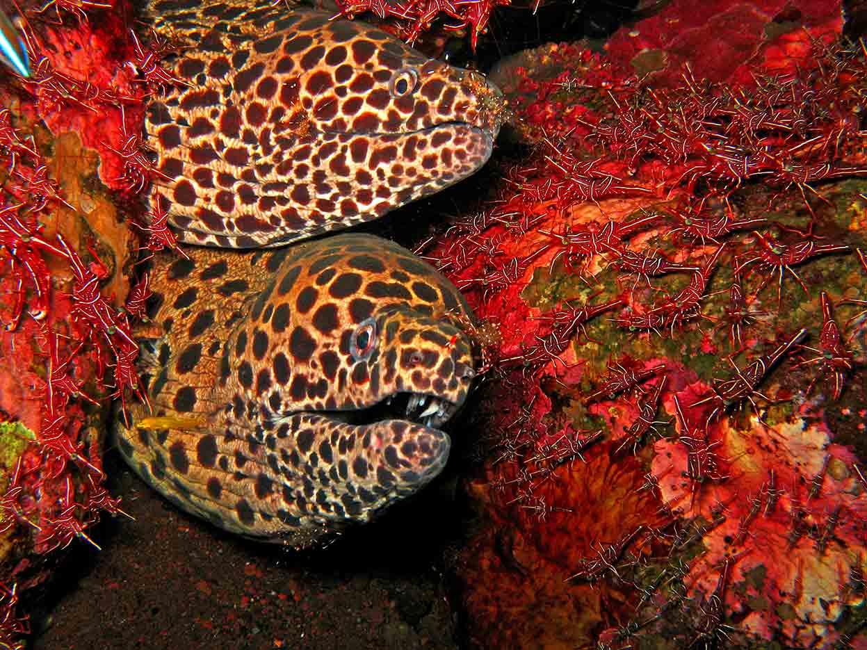 Gili-Trawangan-Lombok-Activities-Activity-Scuba-Scubadive-Scubadiving-Dive-Diving-05.jpg