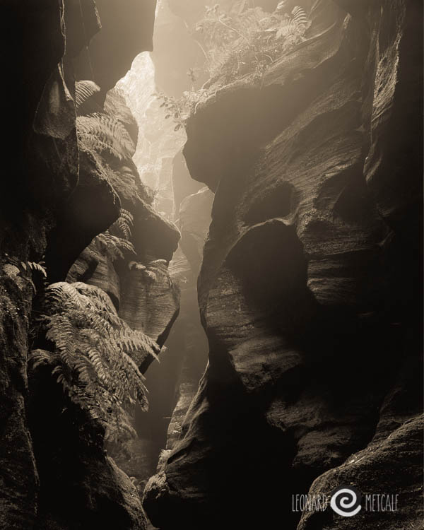 Faces in the Canyon, The Greater Blue Mountains World Heritage Area © Leonard Metcalf 2000