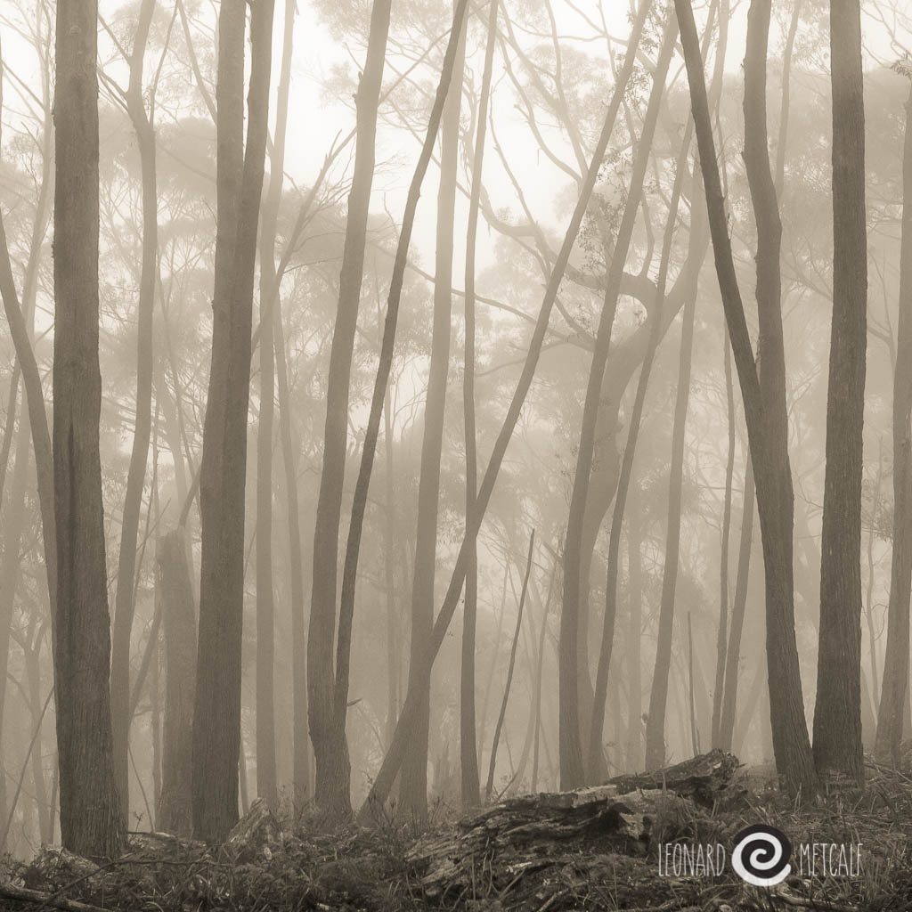Morning mist is an advantage of staying in the upper Blue Mountains © Leonard Metcalf 2010