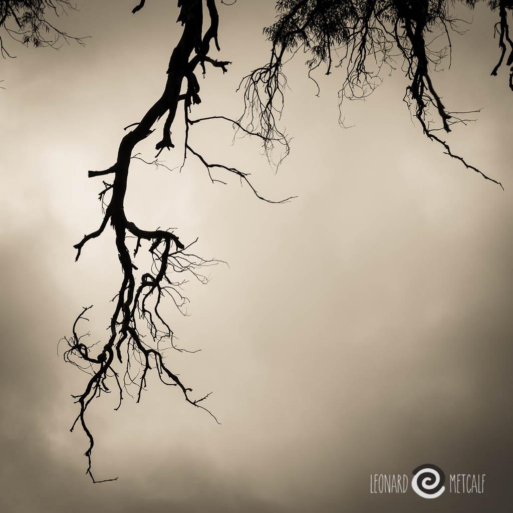 Endurance at Cazneaux's tree Flinders Rangers © Leonard Metcalf 2014