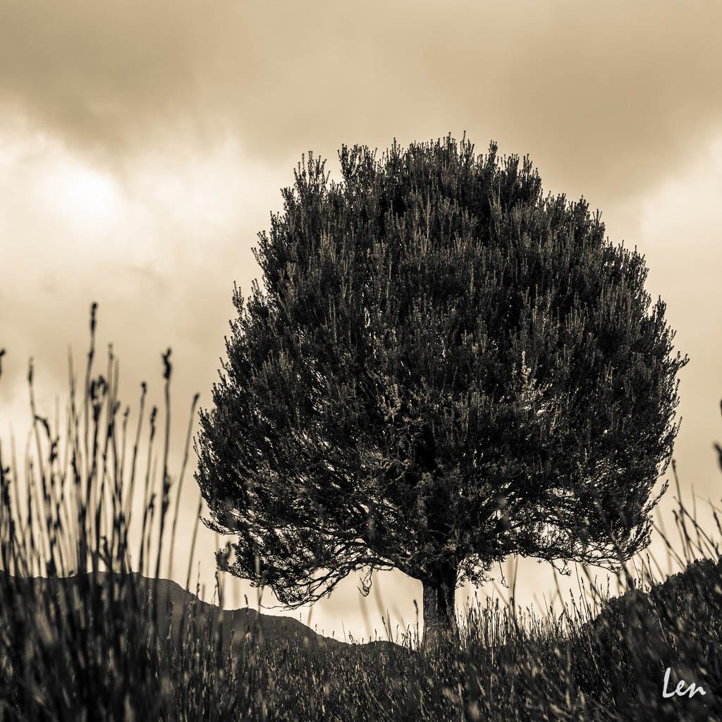 Cradle Mountain Tasmania © Leonard Metcalf 2013