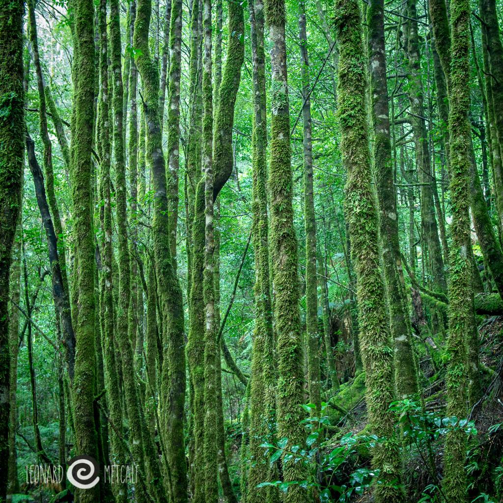 Philosophers Falls, Waratah, The Tarkine World Heritage Wilderness © Leonard Metcalf 2015