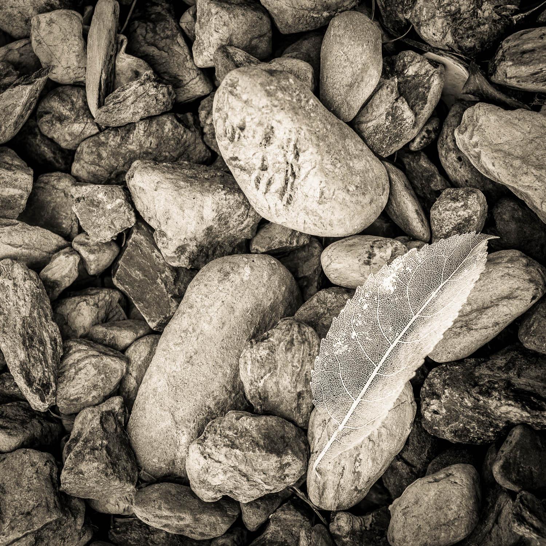 Wabi Sabi - Hopewell, New Zealand, Olympus OM-D EM-1, Voitlander 25mm f0.95 lens © Len Metcalf 2016