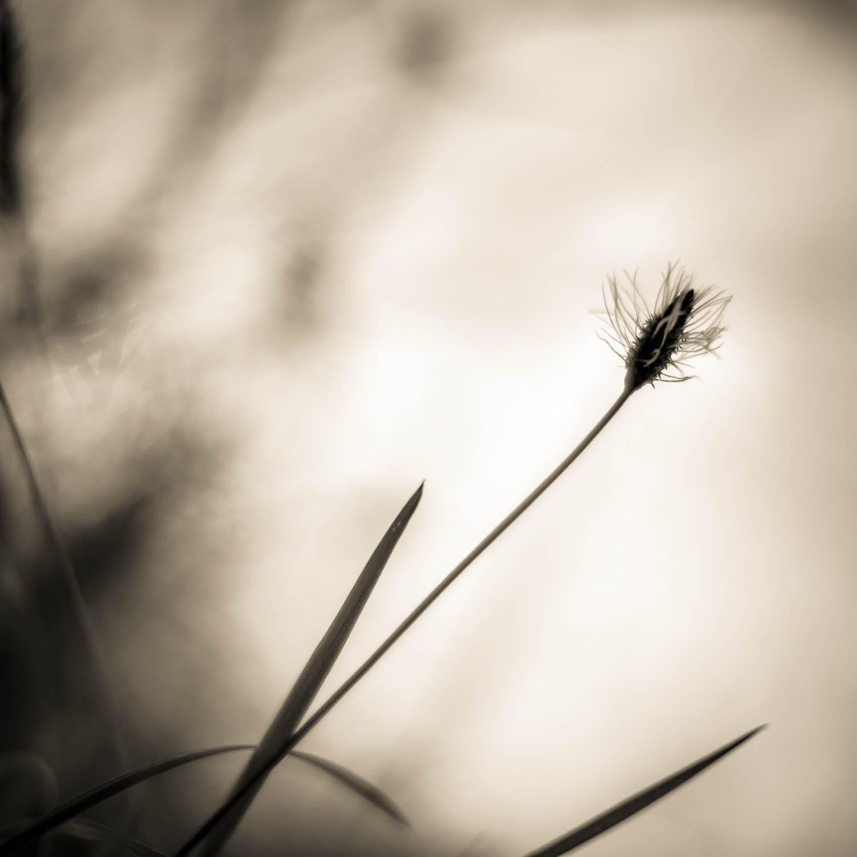 Wabi Sabi, Hopewell Reflections..... Copyright © Len Metcalf 2016