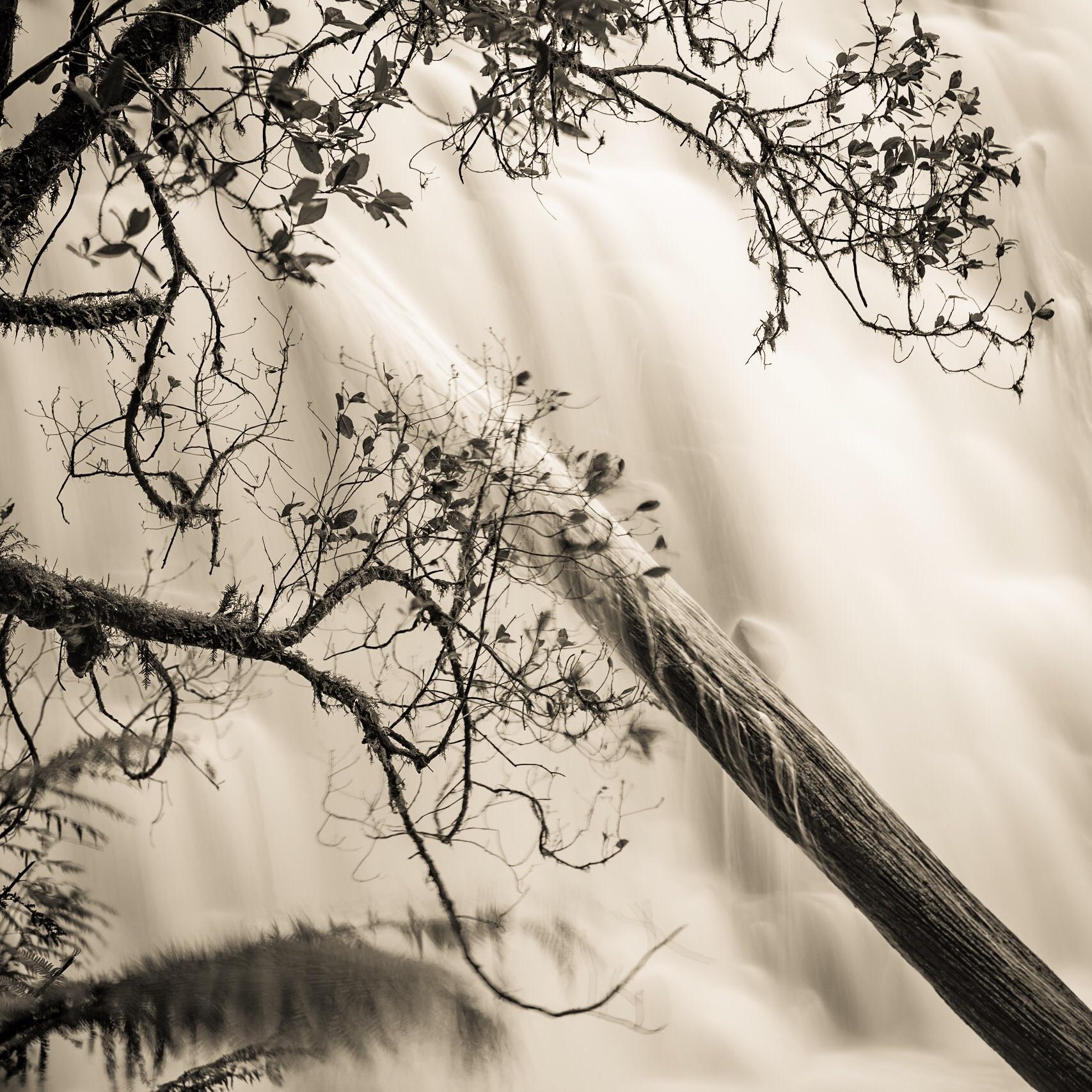 Dip Falls, the Tarkine, Tasmania. Copyright (c) Len Metcalf 2016