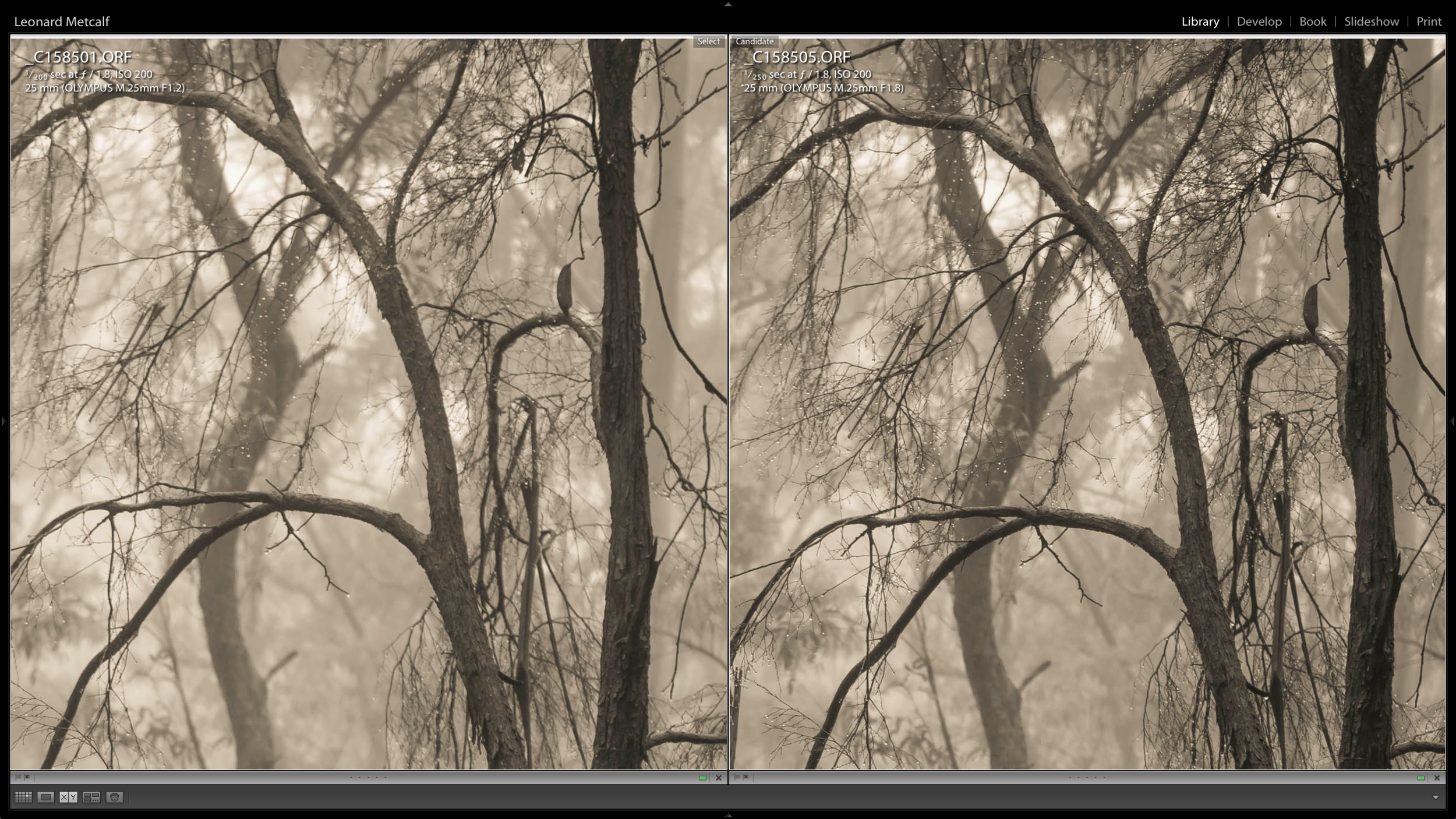 Olympus 25mm f1.2 on left and Olympus 25mm f1.8 on right both shot at f 1.8 - The f1.8 appears to have better micro contrast, while the f1.2 Pro version has smoother out of focus areas. I can't pick the difference in sharpness.