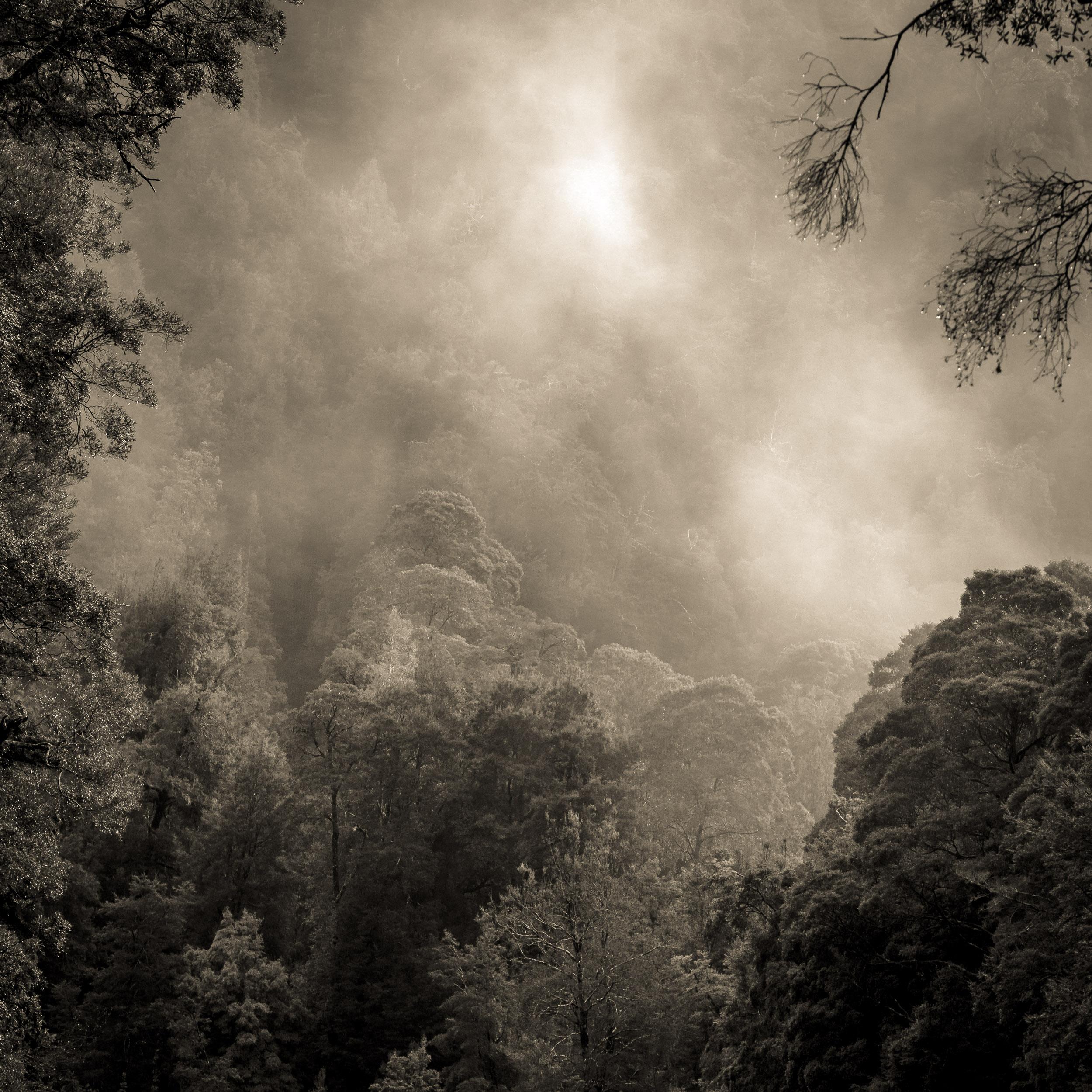 Mist in the Tarkine Wilderness - The Donaldson River, Corrina, The Tarkine. Copyright © Len Metcalf 2017