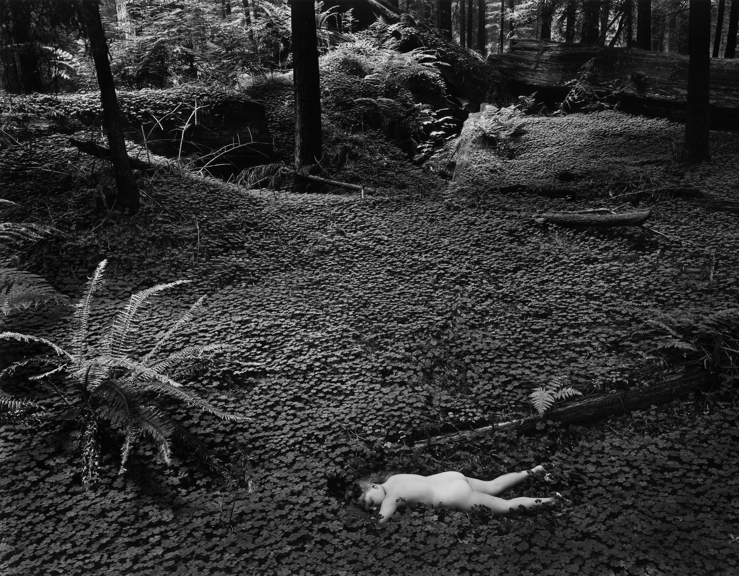 Child in Forest © 1951 Wynn Bullock