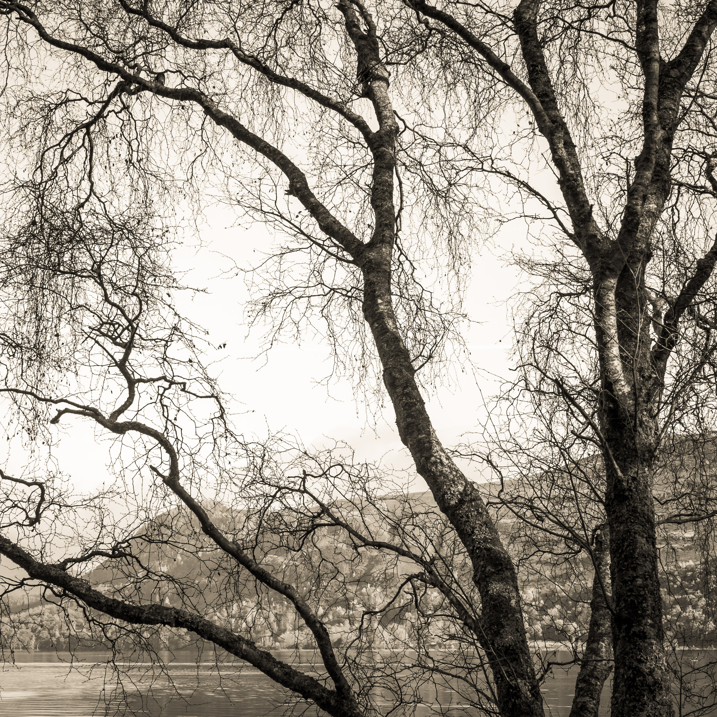 The branches in this photograph are framed to create multiple triangles in my composition.  They force the viewers eye to explore the photograph, as the eye can not sit still on an angled line. The repeating triangles strengthen each other.
