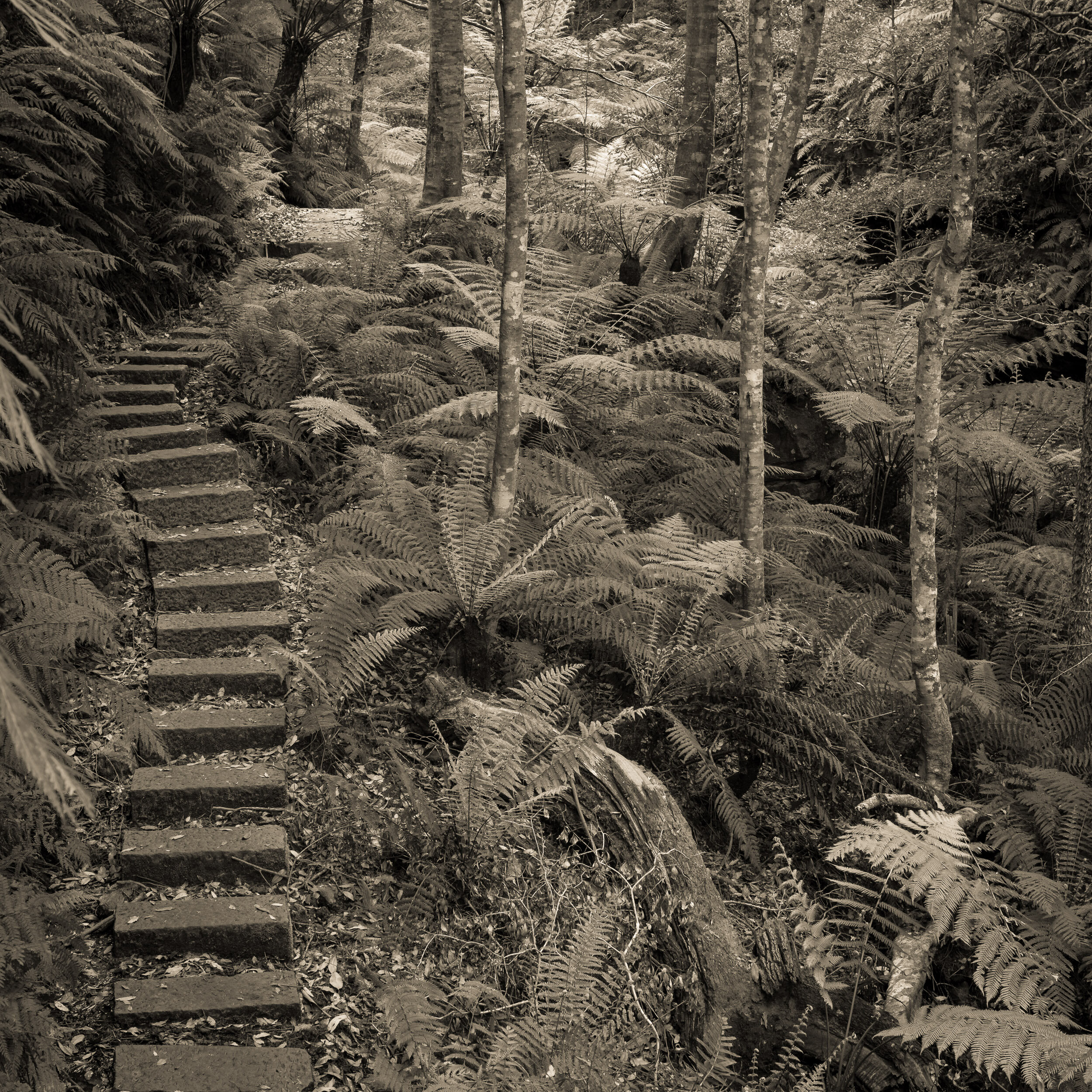 This photograph uses linear perspective to create a sense of depth. The steps are reducing in size as they recede into the distance. The small 'S' curve also helps this along.