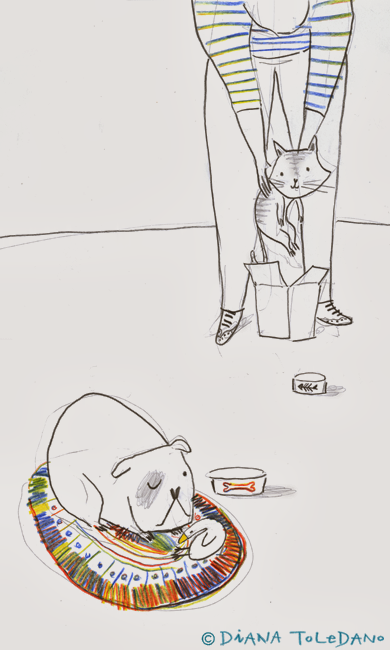 cat-dog-illustration-diana-toledano2.png