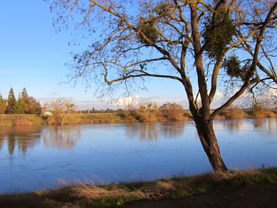 """Sacramento River"" photograph by Diana Toledano"