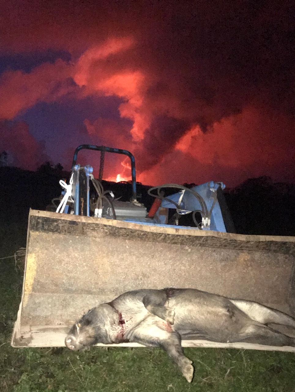 Hugh's tractor pig lava.jpg