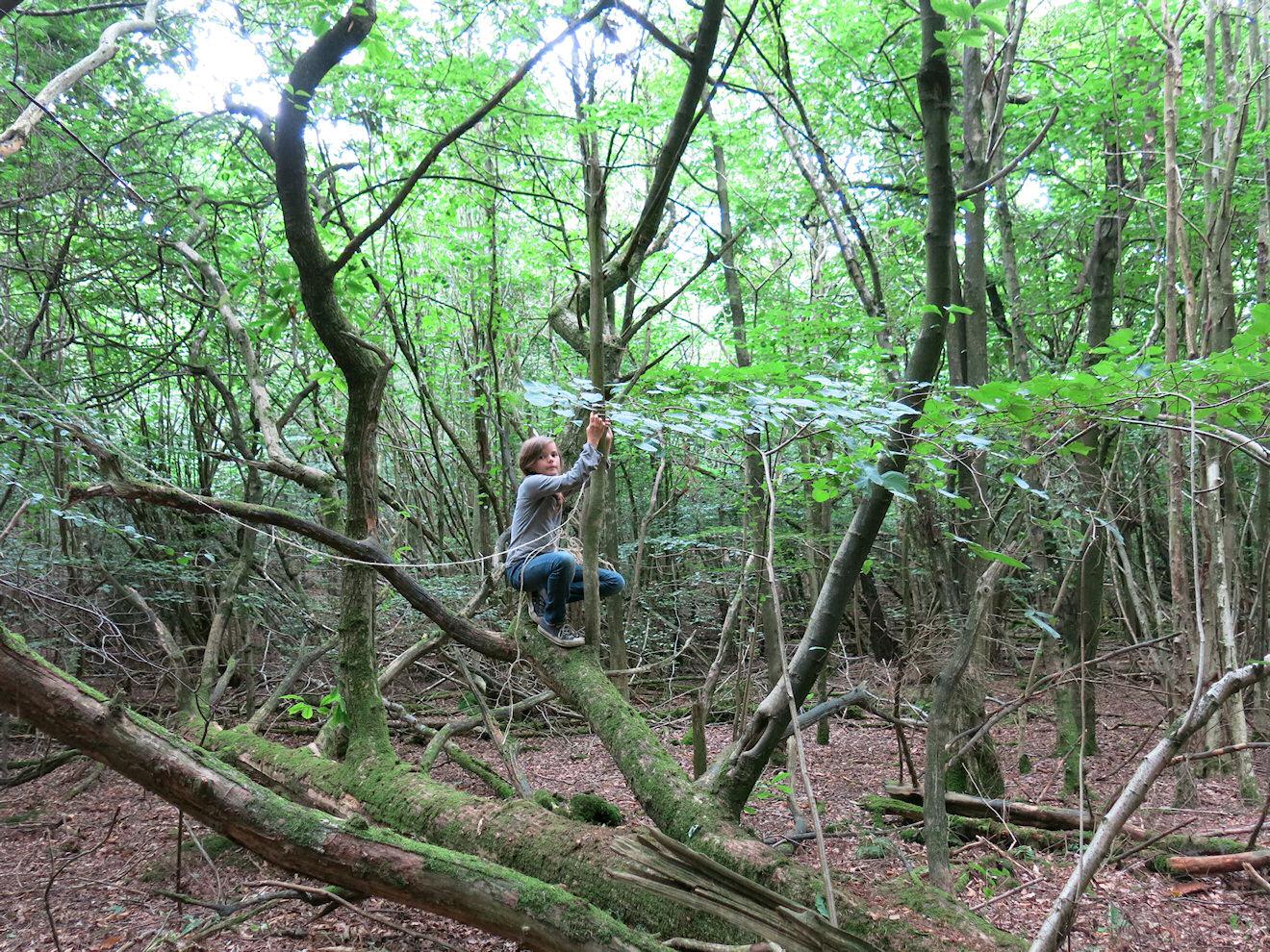 girl in tree.jpg