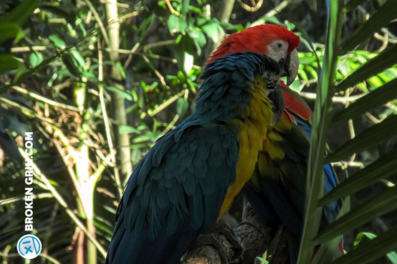 australia-zoo-10.jpg