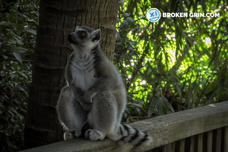 australia-zoo-9.jpg