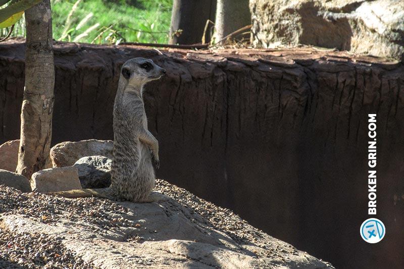 australia-zoo-12.jpg