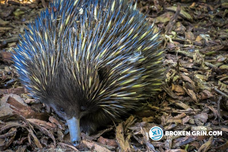 australia-zoo-1.jpg