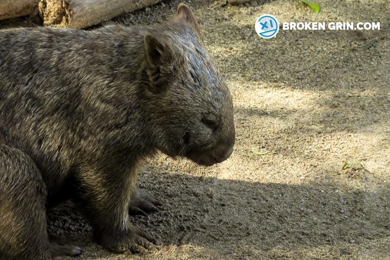 australia-zoo-6.jpg