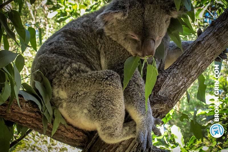 australia-zoo-8.jpg
