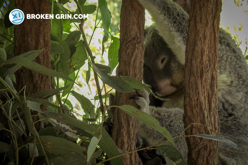 australia-zoo-7.jpg