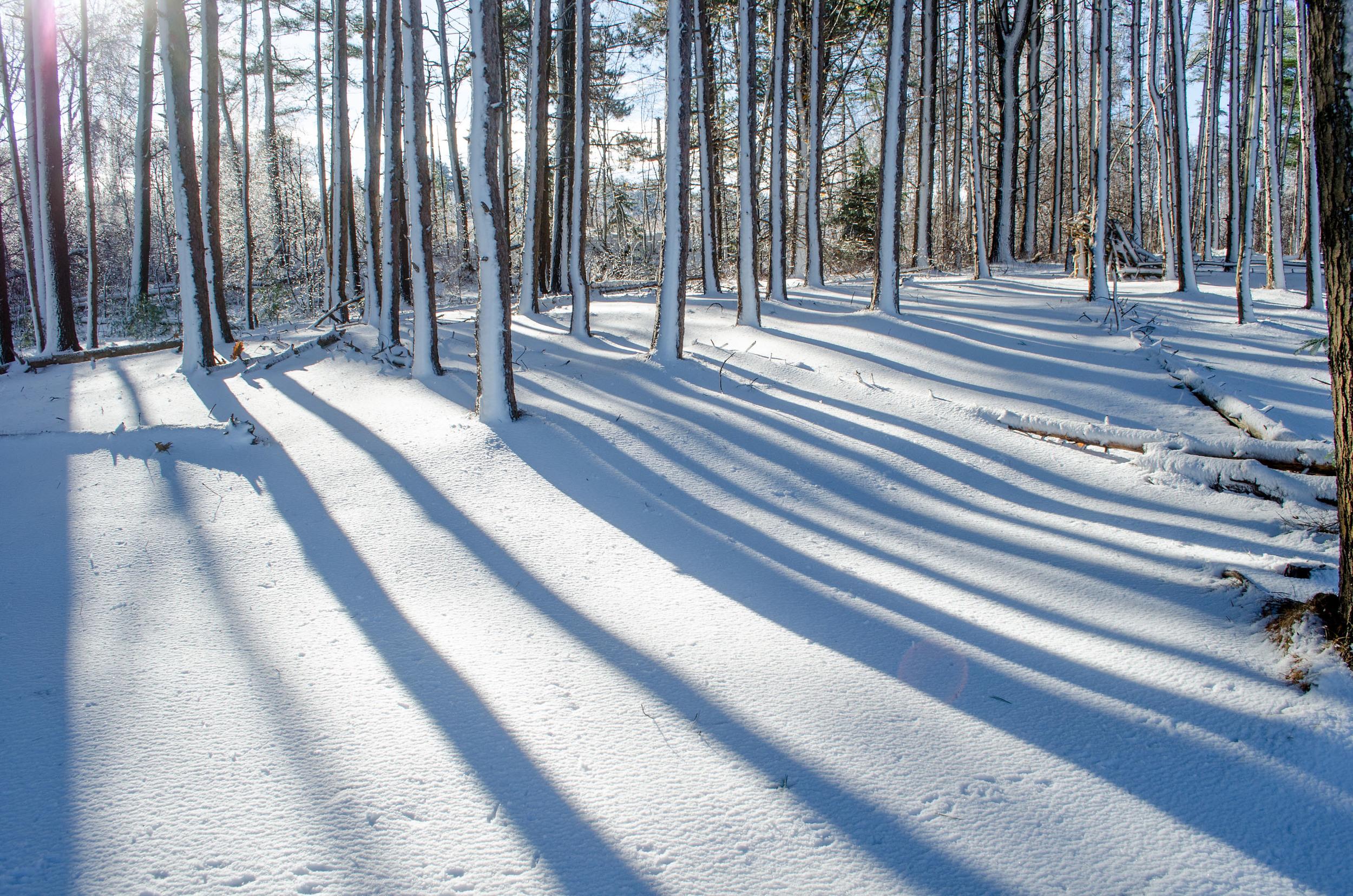 Winter Wonder Land_DSC0108.jpg