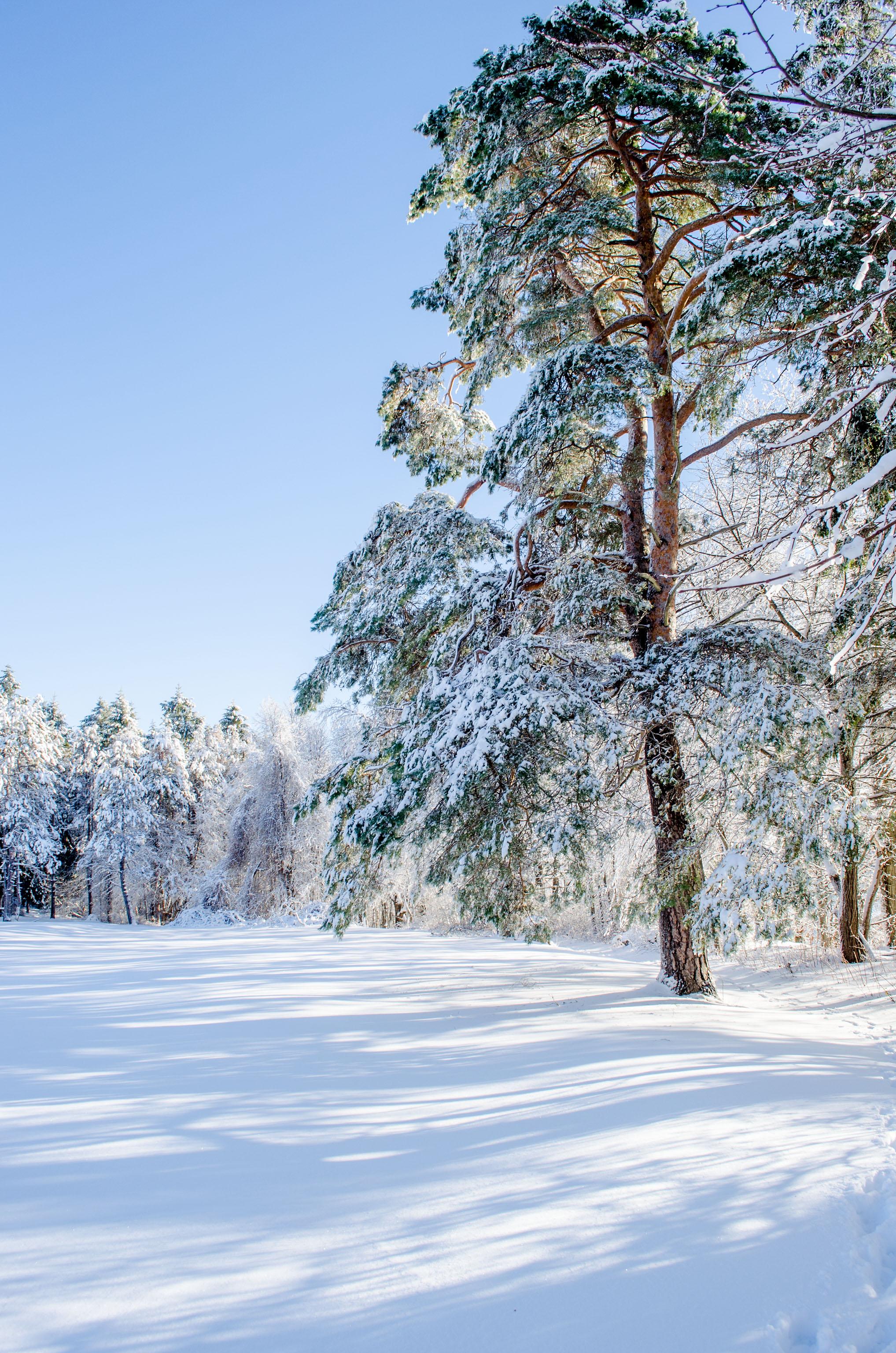 Winter Wonder Land_DSC0046.jpg