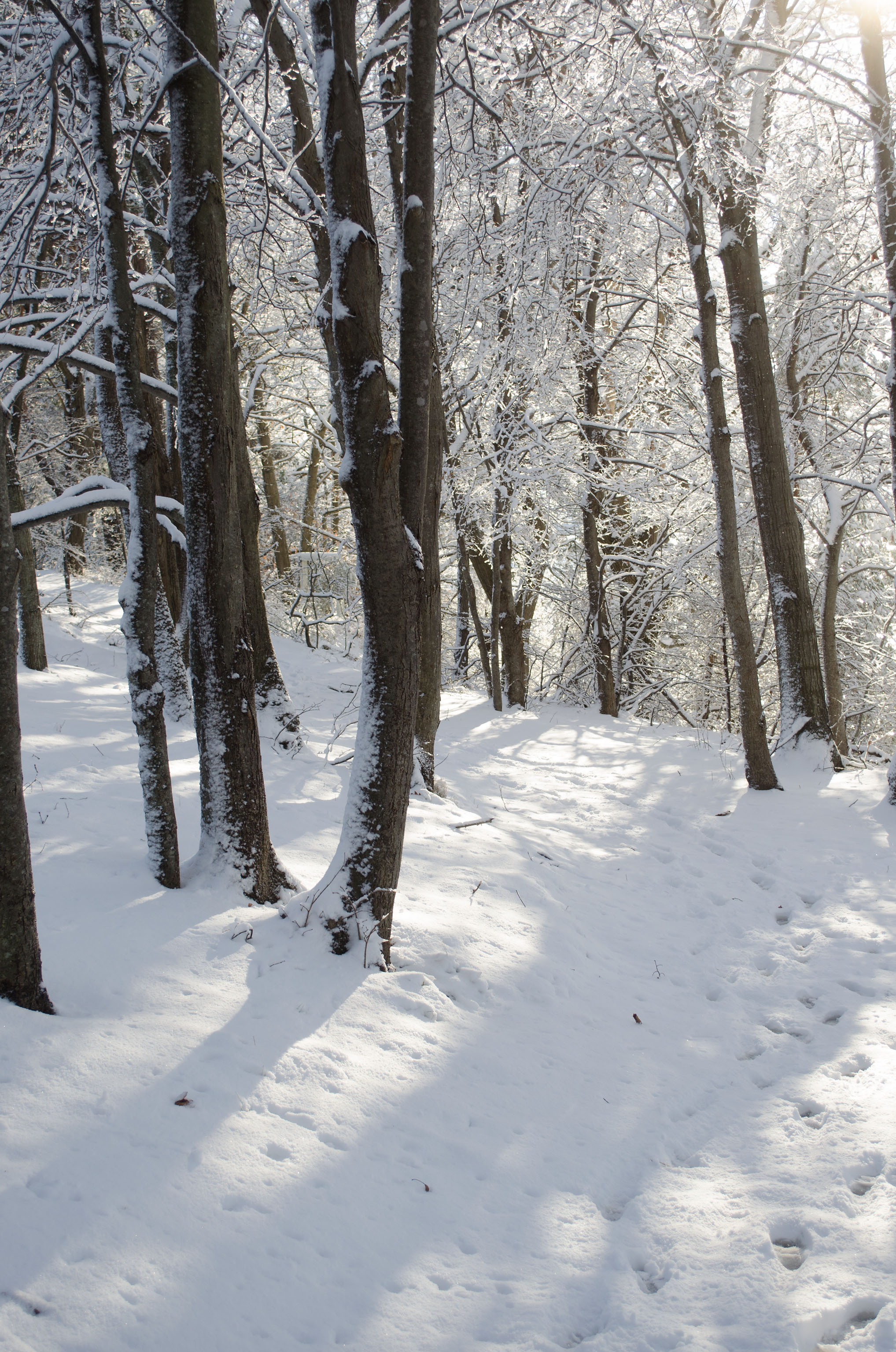 Winter Wonder Land_DSC0031.jpg