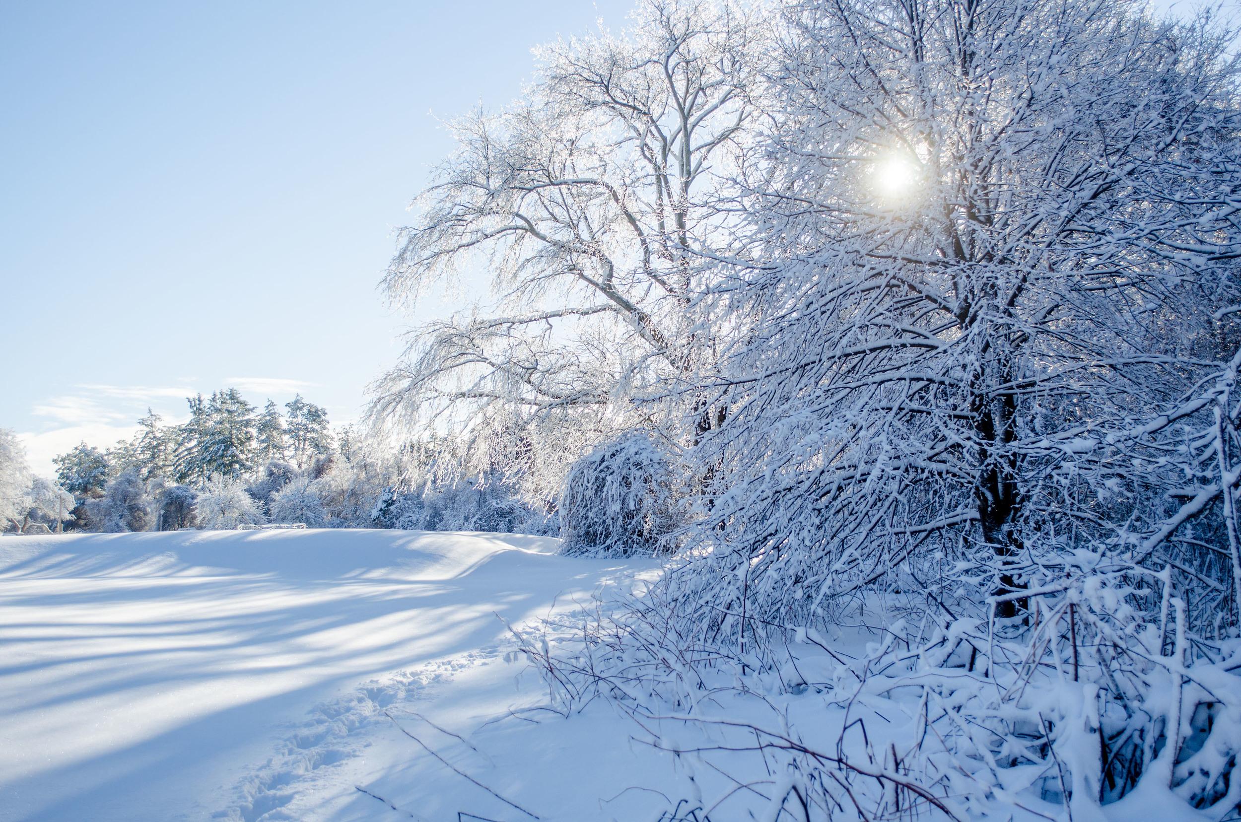 Winter Wonder Land_DSC0021.jpg