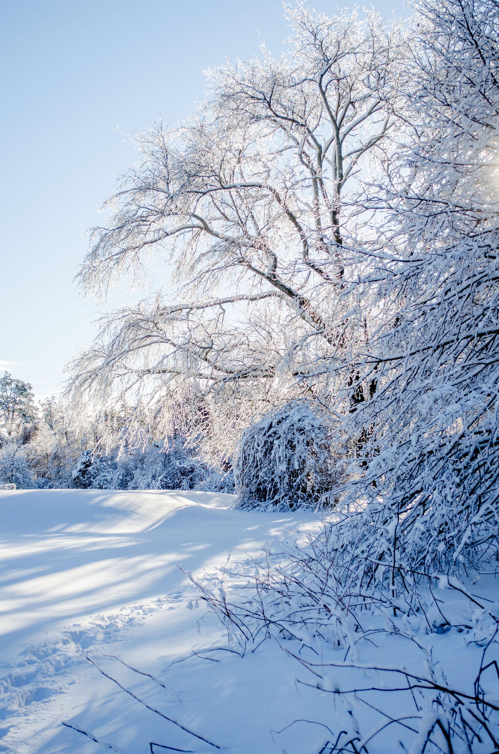 Winter Wonder Land_DSC0024.jpg