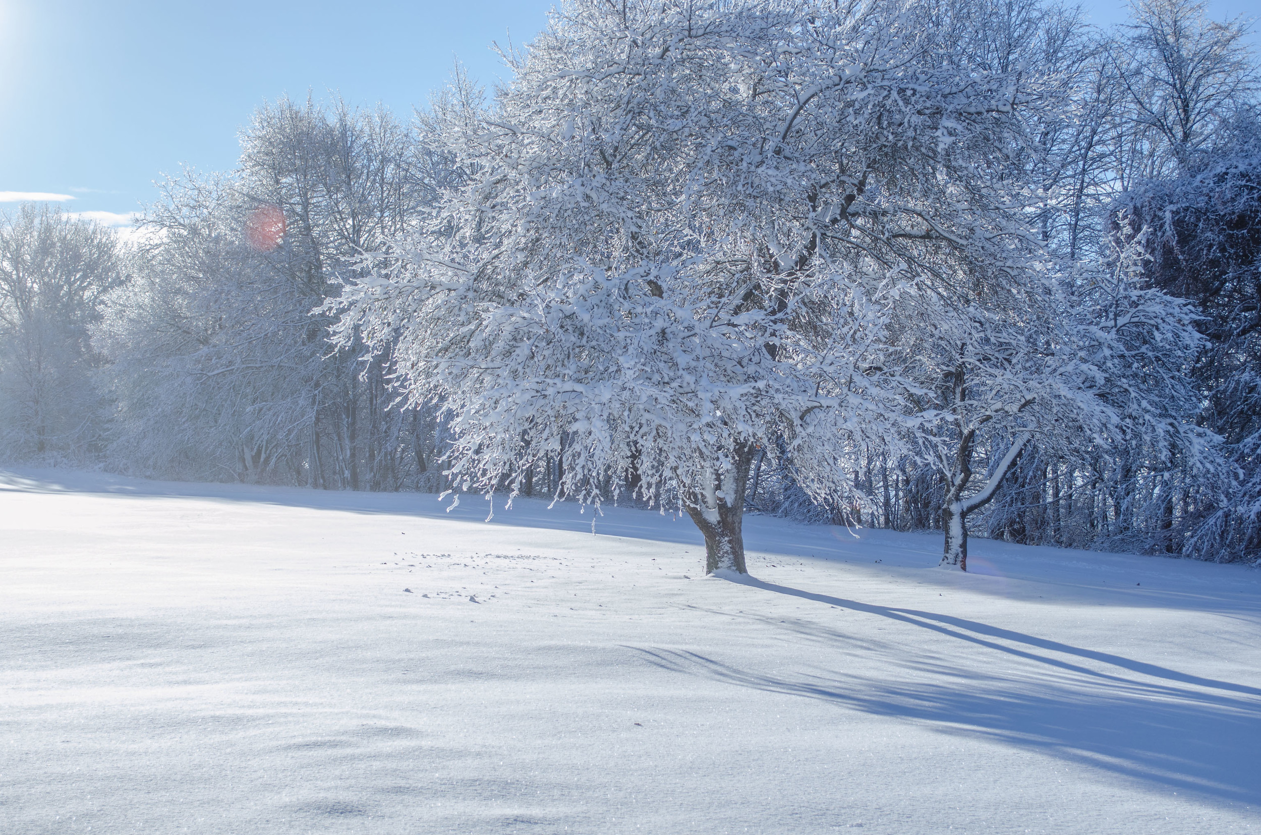 Winter Wonder Land_DSC0010.jpg