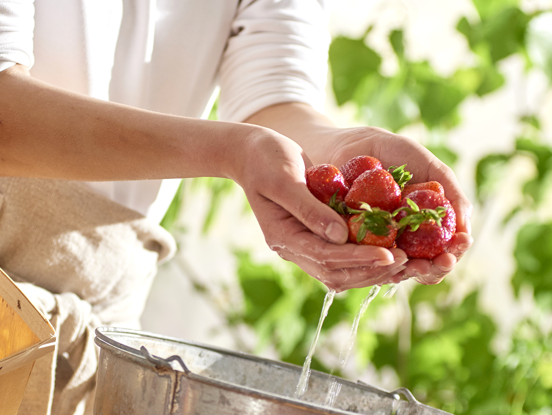 Strawberries In Hand.jpg