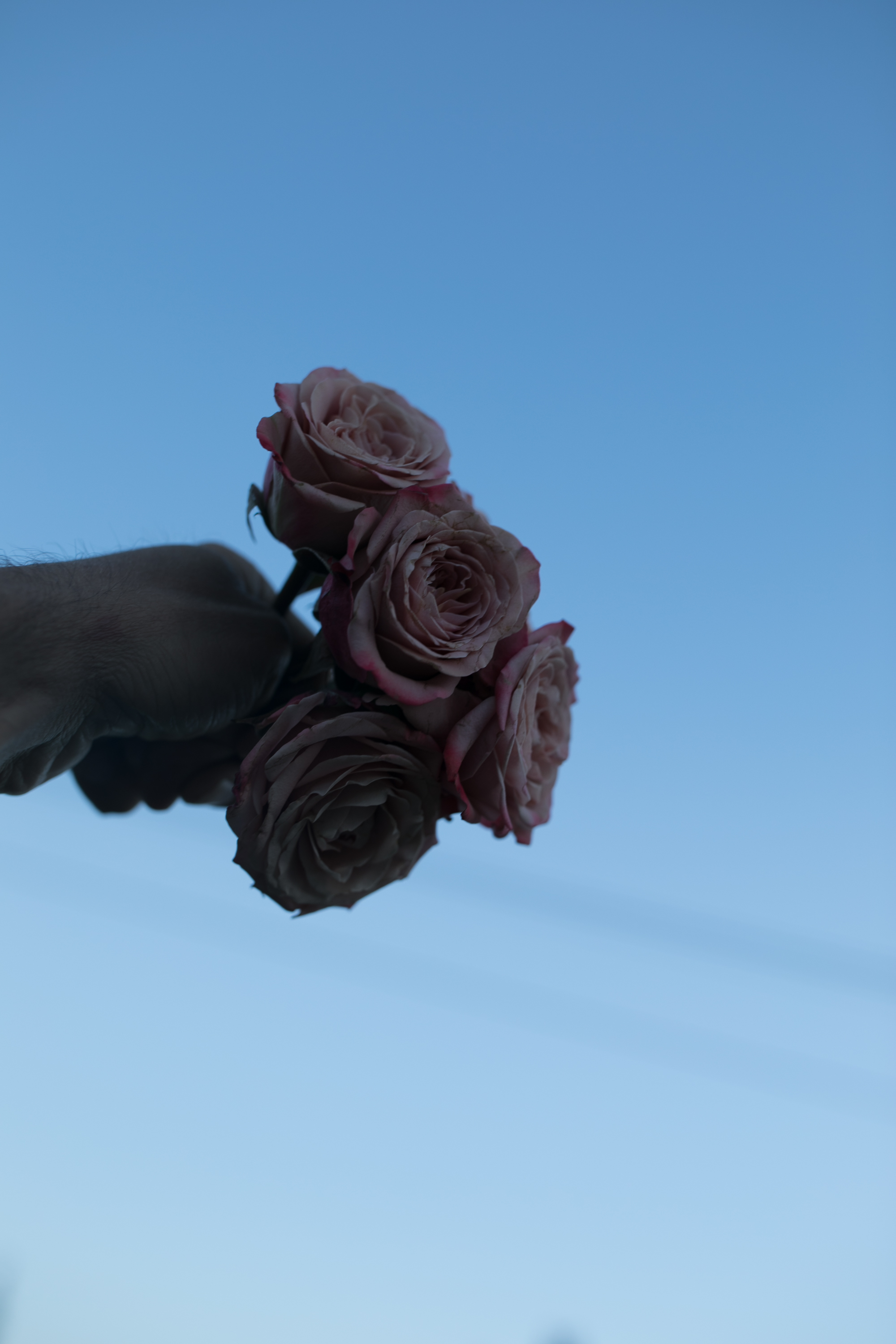 I noticed - the amazing floral designsin the middle of the tables during the reception and pulled some roses out of them. I went outside and set my camera to