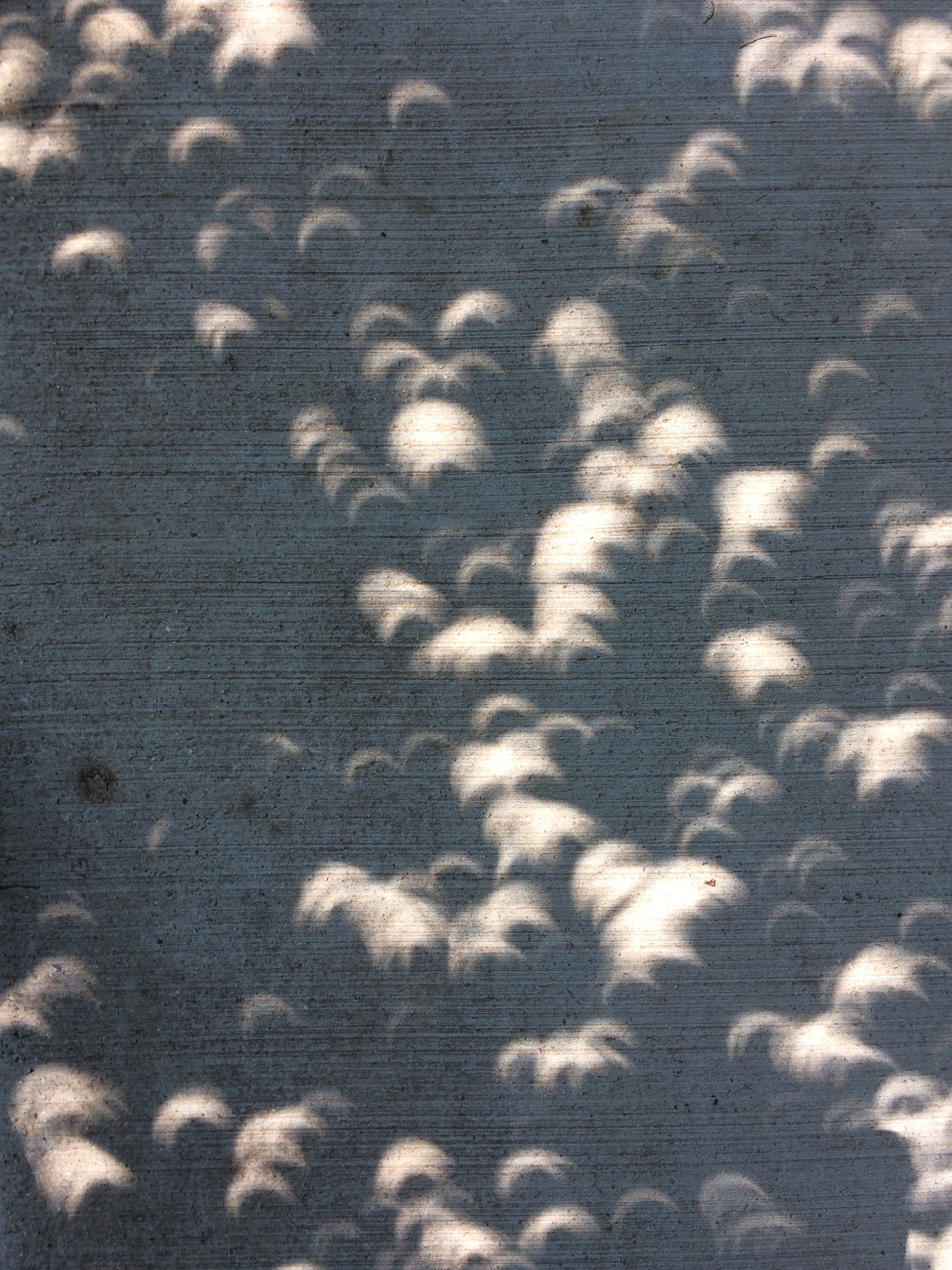 eclipse 08212017 Mitchell Park Washington DC SPB.JPG