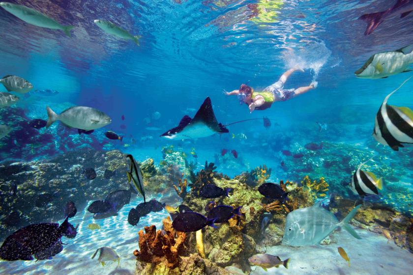 Courtesy of  aquaworld.com