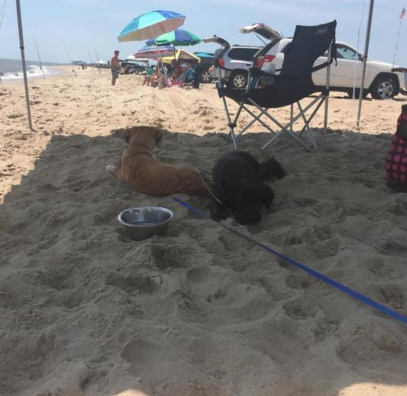 Tailgate beach partee?