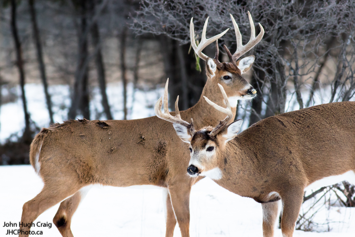 Pair of Bucks 2