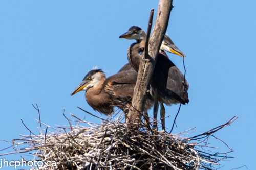 Crowded in the Nest