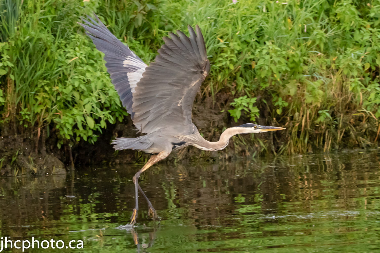 Heron Takeoff