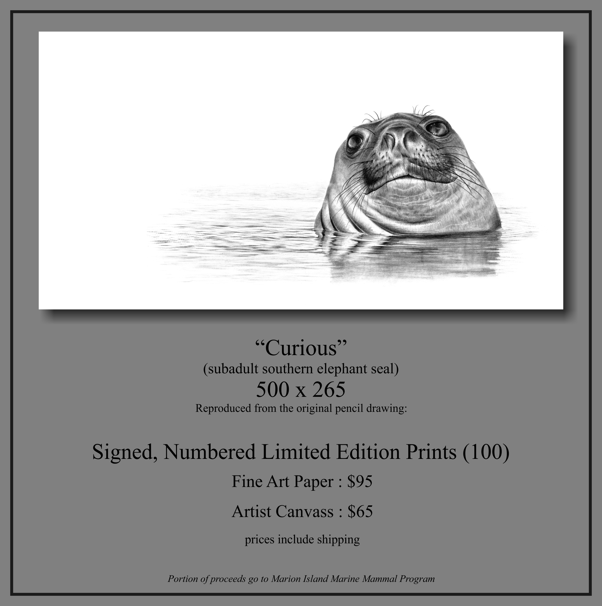Elephant_seal Large Print.jpg