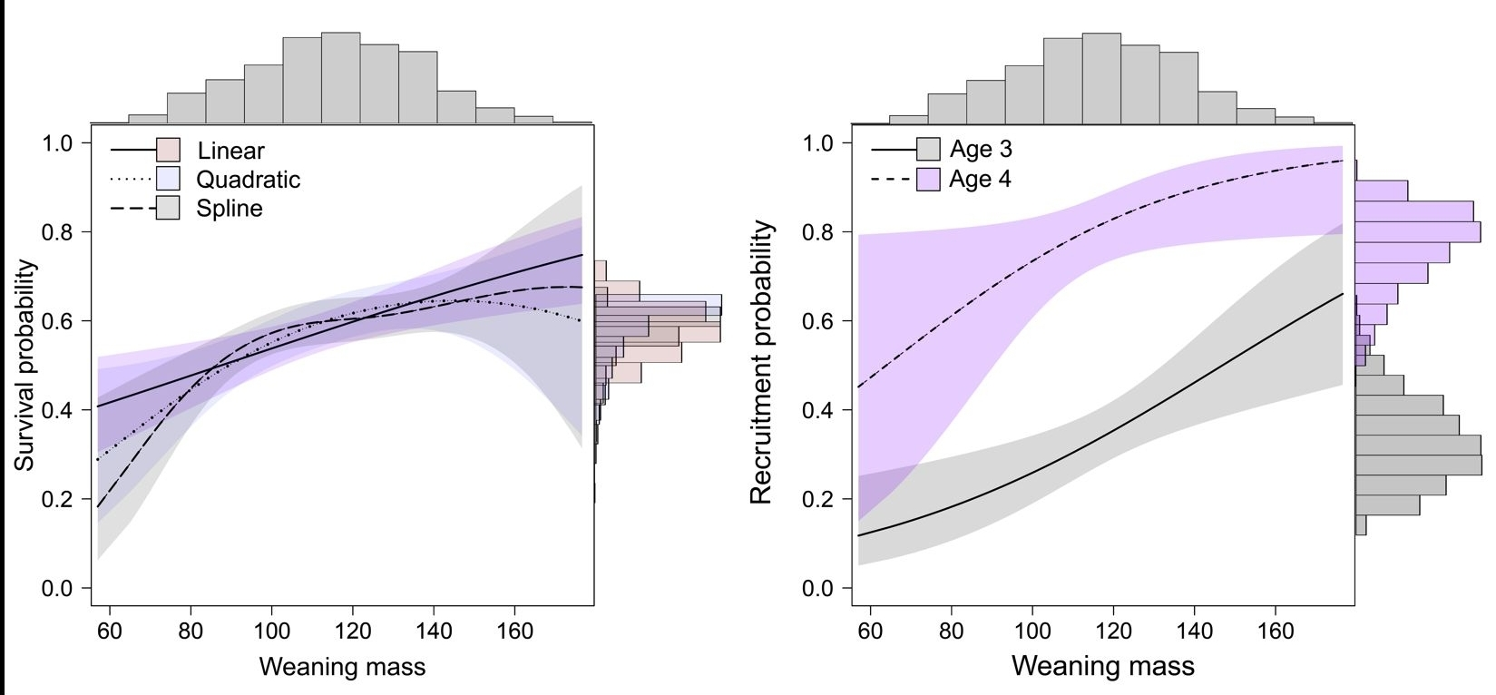 Weaning mass correlated positively with first-year survival (Figure left), but its influence was unimportant for survival of older pre-breeders and breeders. In contrast, a strong positive link persisted between weaning mass and the age of first reproduction, which typically occurs at ages three and four in female elephant seals (Figure right).