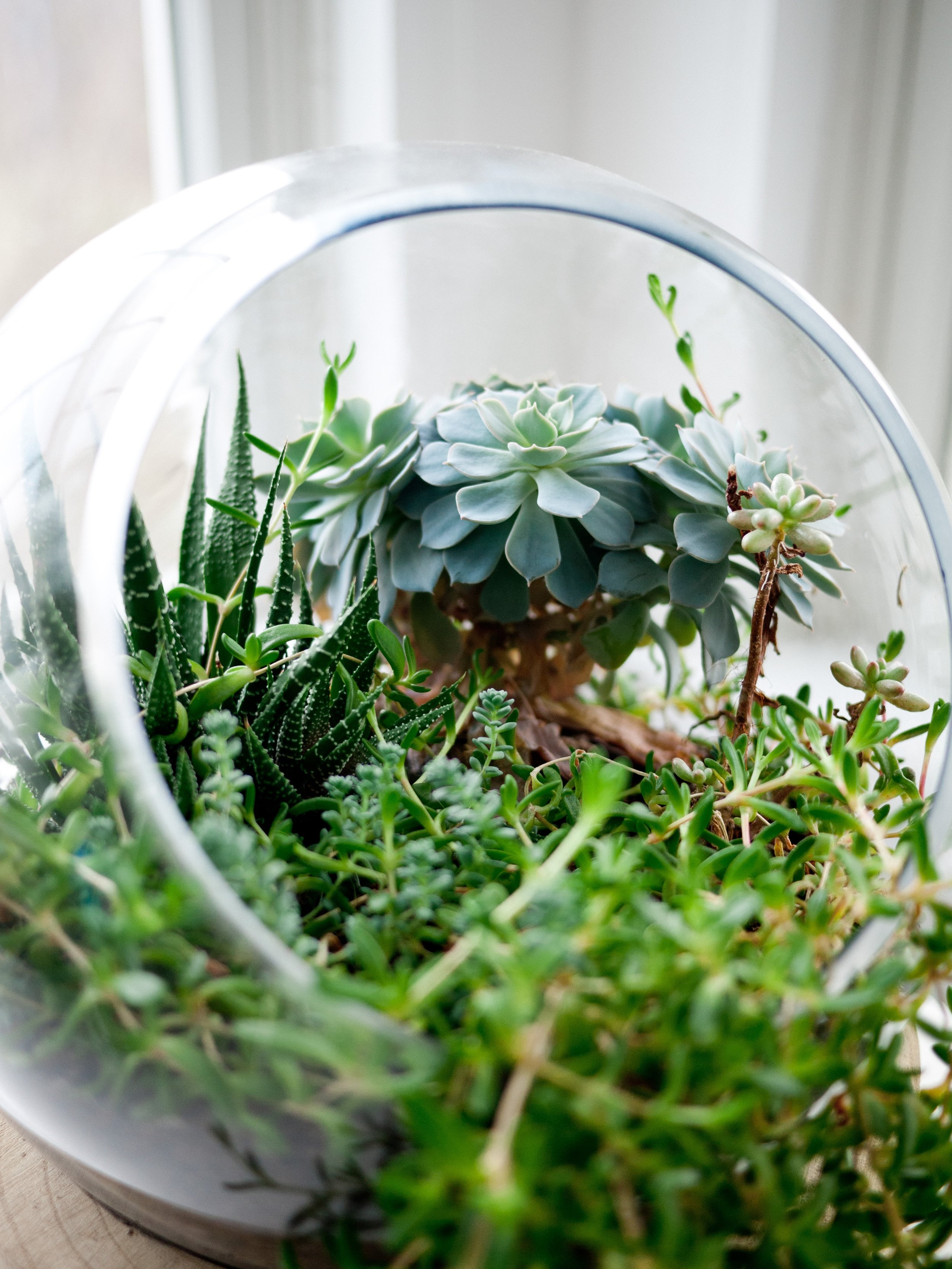 Design and create your own living terrarium - Under the guidance of the delightful Lucinda aka flower_fairy81, design and create your own fishbowl style planted terrarium, with a little bit of looking after, will last years ! All materials will be included, along with a glass of Aperol Spritz and a selection of tapas dishes freshly prepared in our kitchens. So come, eat, drink, create your terrarium and be merry !