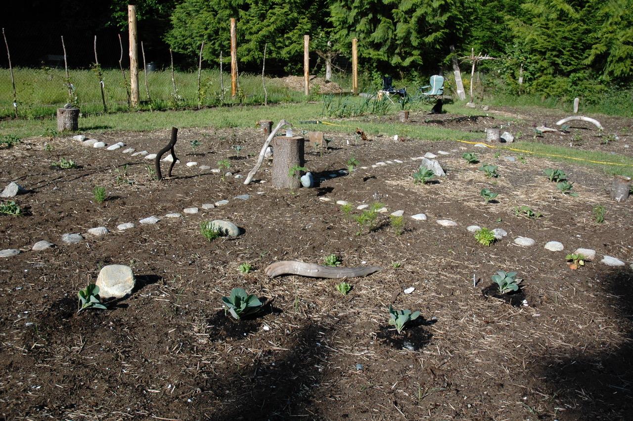 Garden 4 (1).jpg