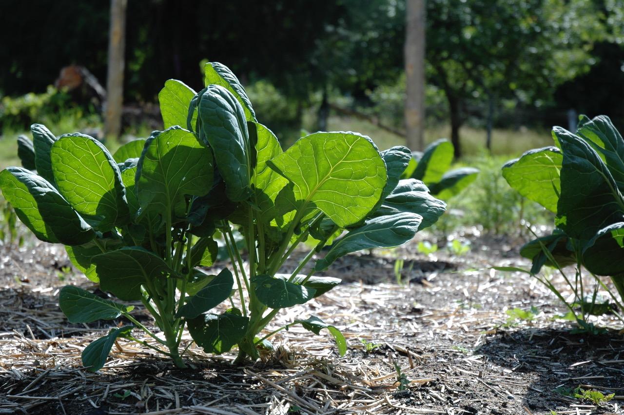 Garden-13.jpg
